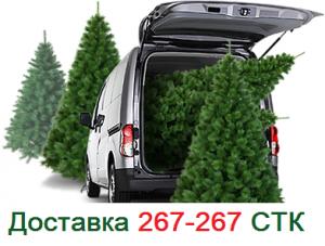 Доставка новогодних елок грузотакси СТК Абакан